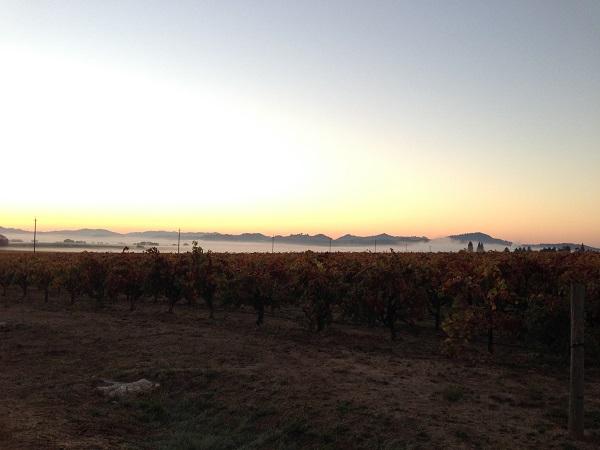 Trentadue Winery - Healdsburg Half